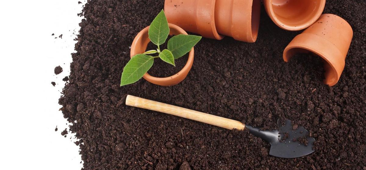 Как приготовить почвогрунт для рассады?*