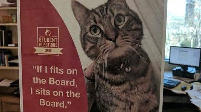 Кот может войти в совет директоров канадского университета