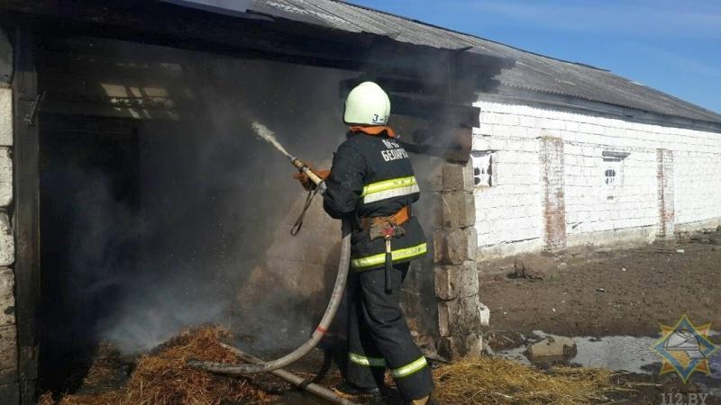 Под Барановичами загорелась пристройка телятника, спасены десятки телят