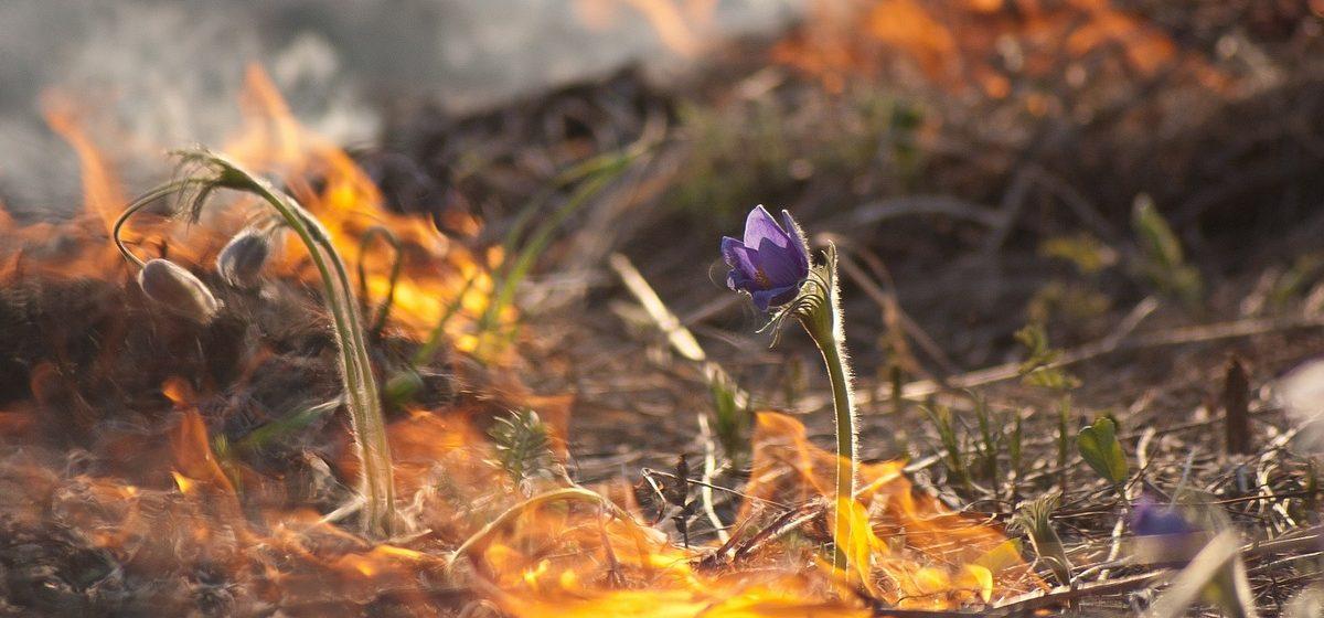Минприроды напомнило о запрете выжигания сухой травы — нарушителям грозит штраф до 980 рублей