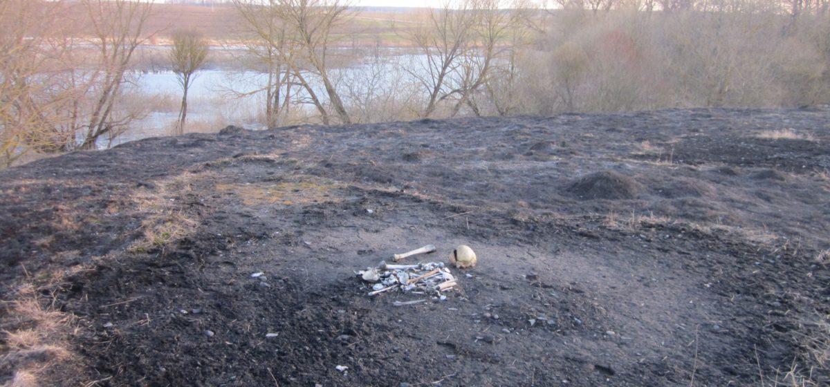 В Барановичском районе при тушении травы обнаружили человеческие кости
