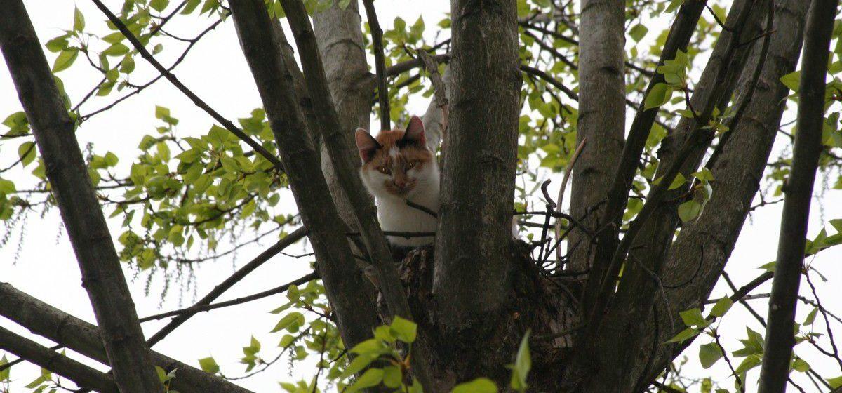 В Бобруйске коммунальщики пять дней решали, кто должен снять с дерева кота