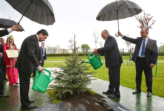 Лукашенко потребовал навести в лесу порядок и заявил, что намерен сам заняться посадкой деревьев