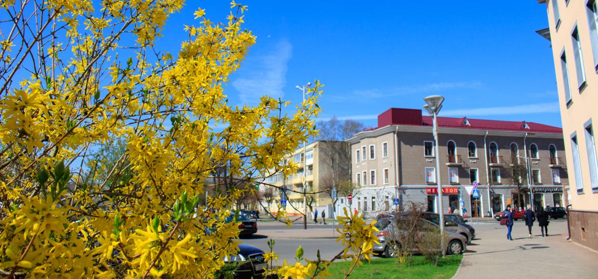 Красивый город. Весна. Цветущие Барановичи. Фоторепортаж