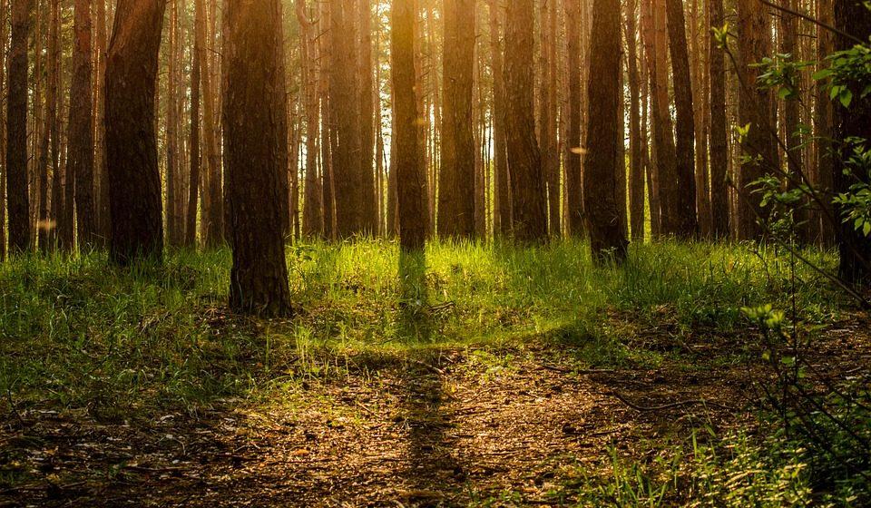 В Беларуси уменьшилась площадь радиоактивного загрязнения лесов