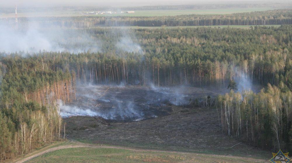 Из-за поджога в Барановичском районе сгорело 160 гектаров леса. Возбуждено уголовное дело