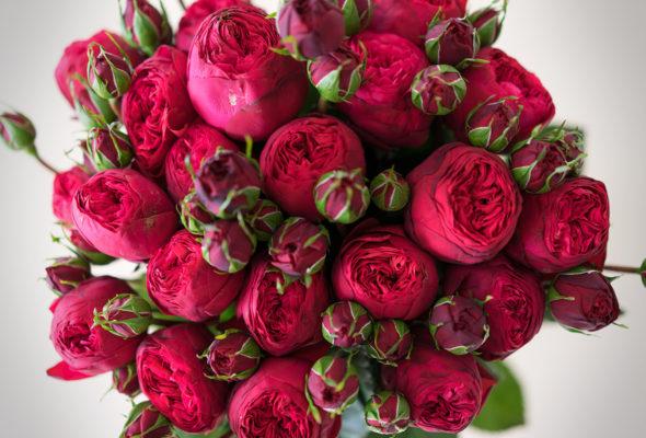 Пионовидные розы – красивый подарок по любому поводу