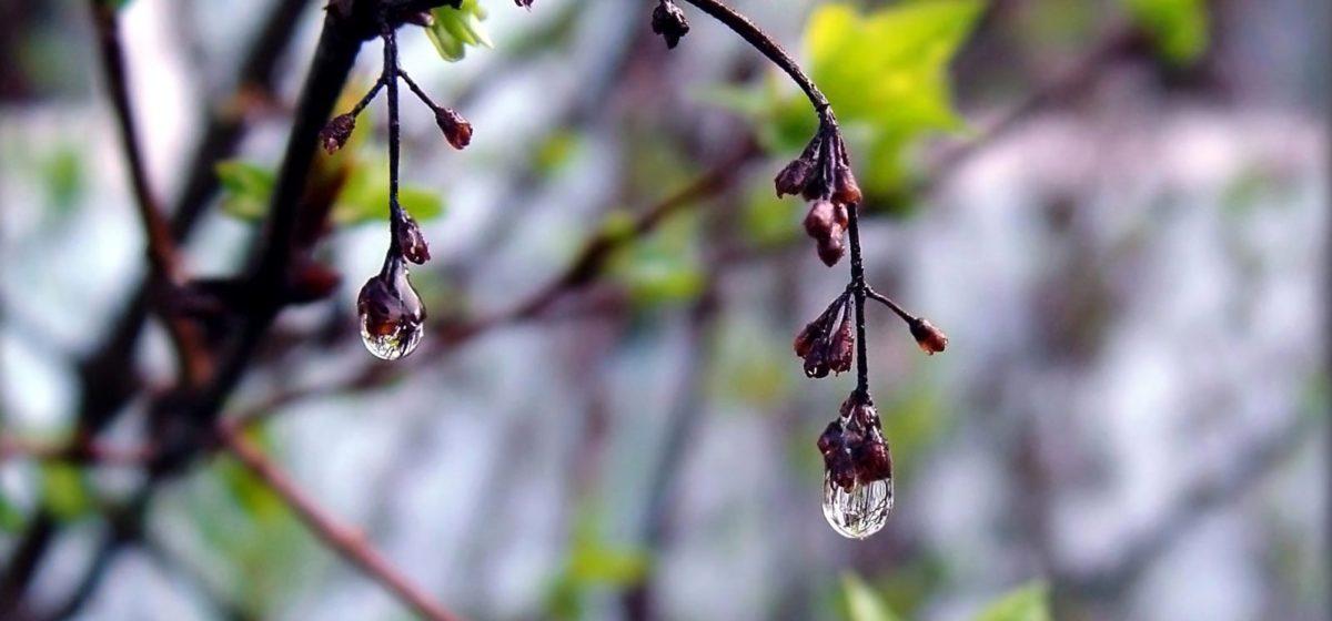 Метеорологи рассказали, ухудшится ли в Барановичах погода в ближайшие дни