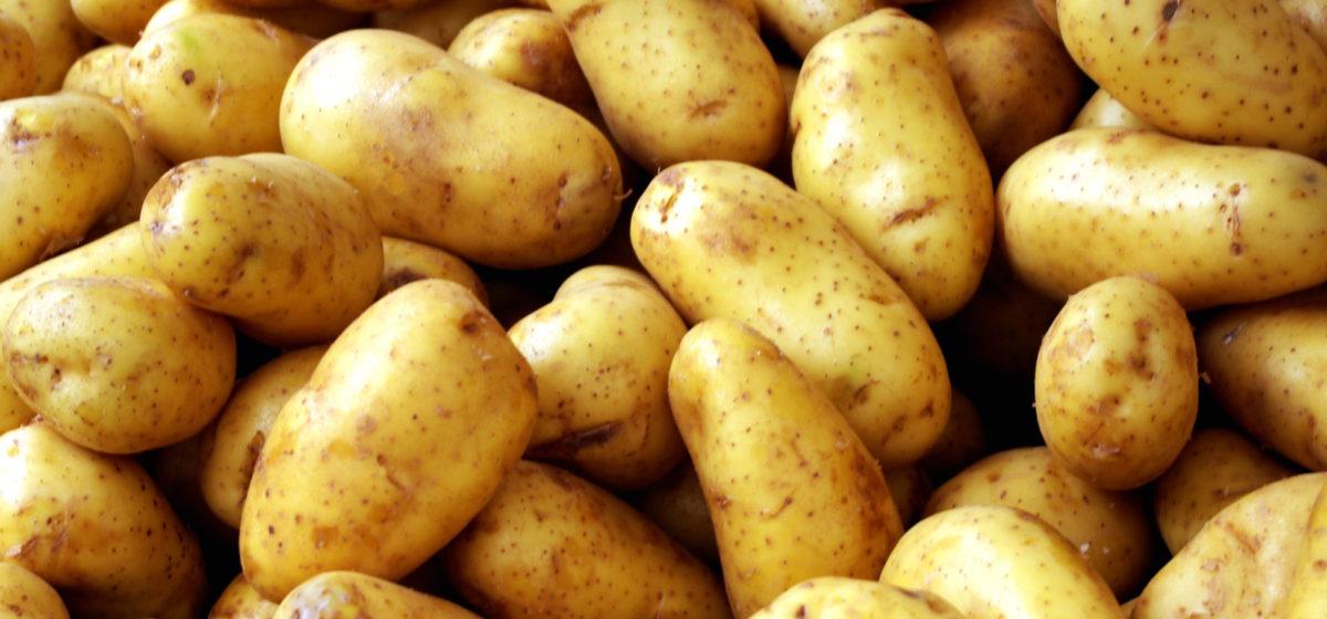 Россия может запретить ввоз картофеля из Беларуси