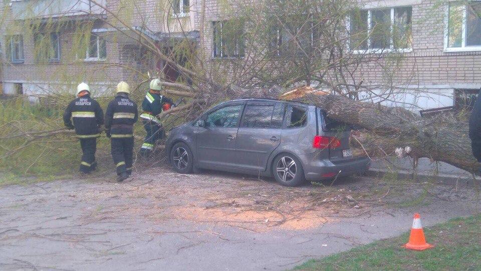 Фотофакт. В Барановичах дерево упало на припаркованный под ним автомобиль
