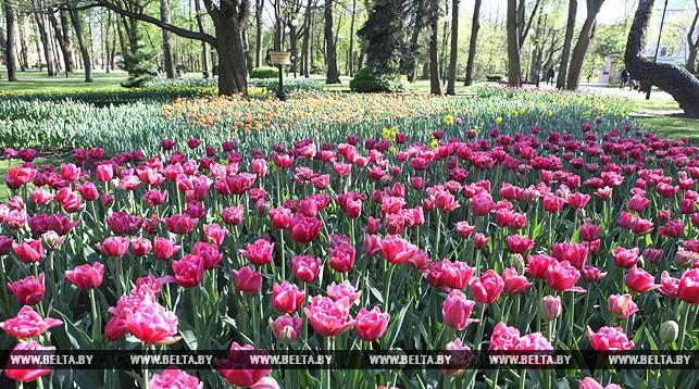 В Беларуси 2 мая ожидается до 29 градусов тепла