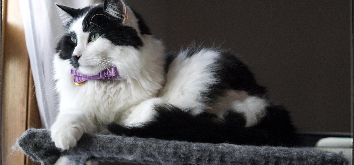 Одинокая пенсионерка завещала коту 1,5 миллиона евро