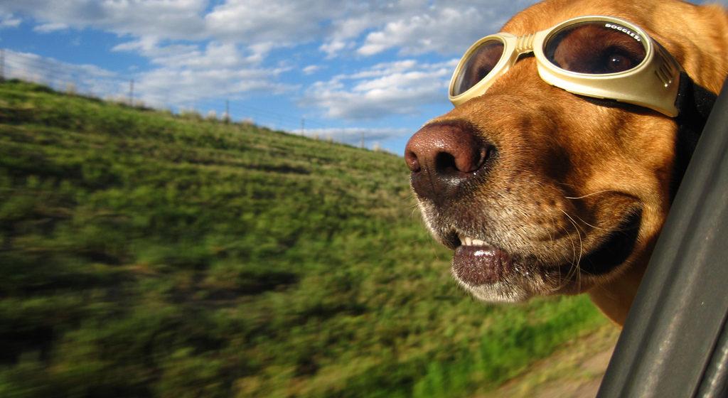 В Беларуси ищут собаку для полетов на самолете, вертолете и воздушном шаре