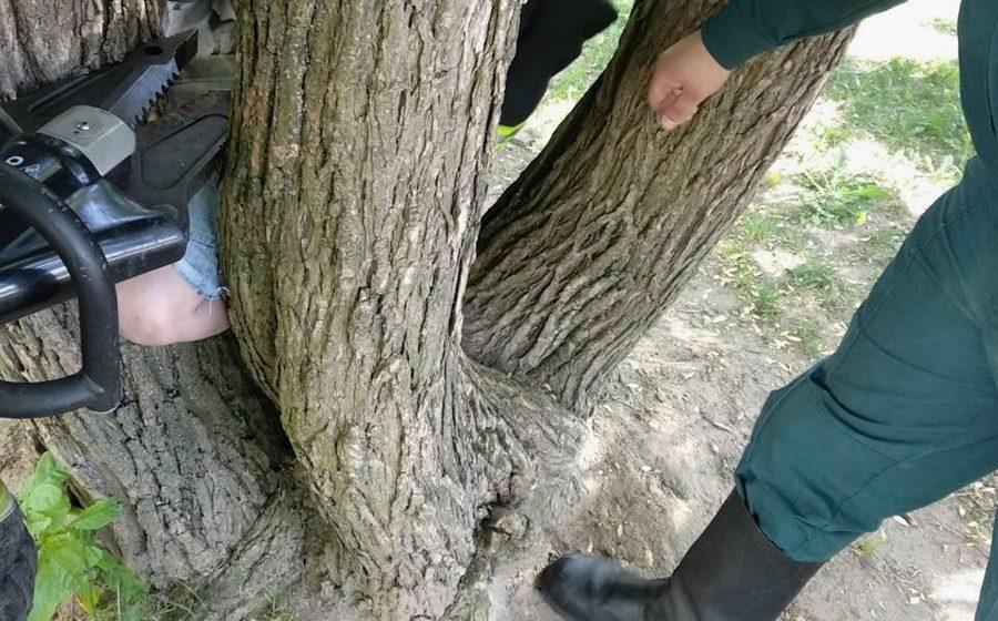 В Минске 5-летний мальчик во время игры застрял между стволами дерева