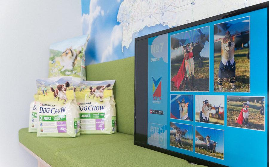 В Беларуси выбрали собаку-авиатора для полетов на самолете, вертолете и воздушном шаре (фото)