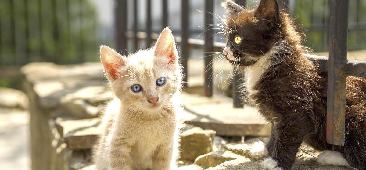 Выбери себе друга. Бездомные животные ищут хозяина