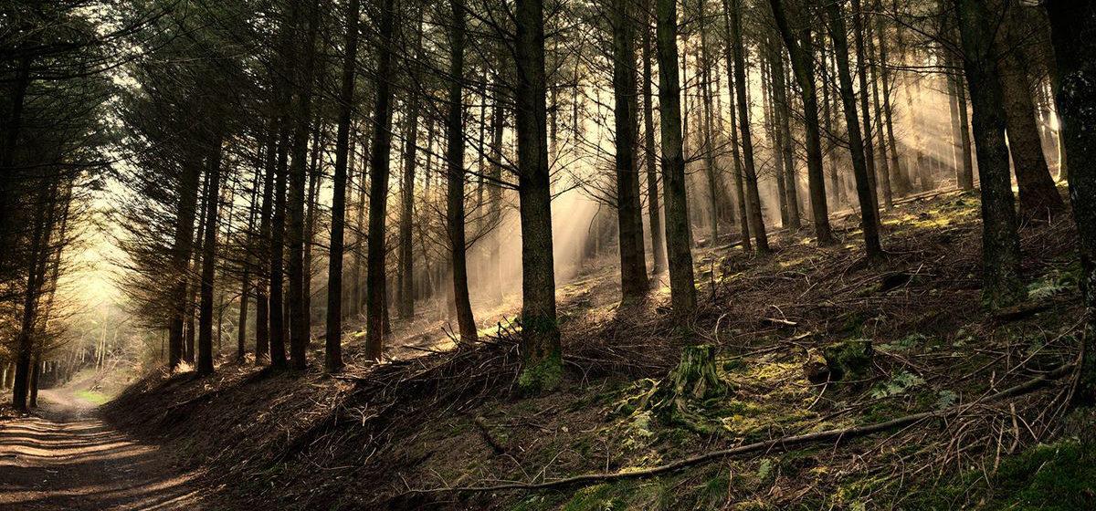 В Барановичском регионе из-за жары введут запрет на посещение лесов