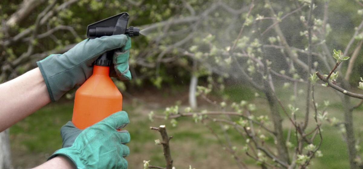 Как спасти урожай в саду от вредителей
