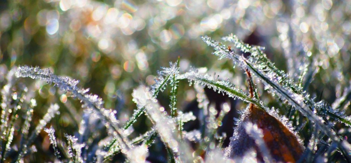 Будут ли заморозки в Барановичах в первые летние дни