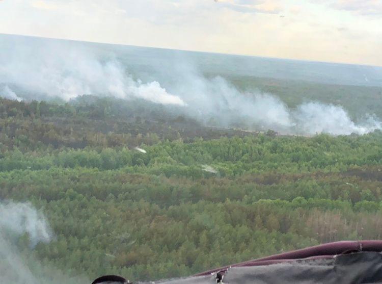 Под Чернобылем горит лес. Изменился ли радиационный фон в Беларуси