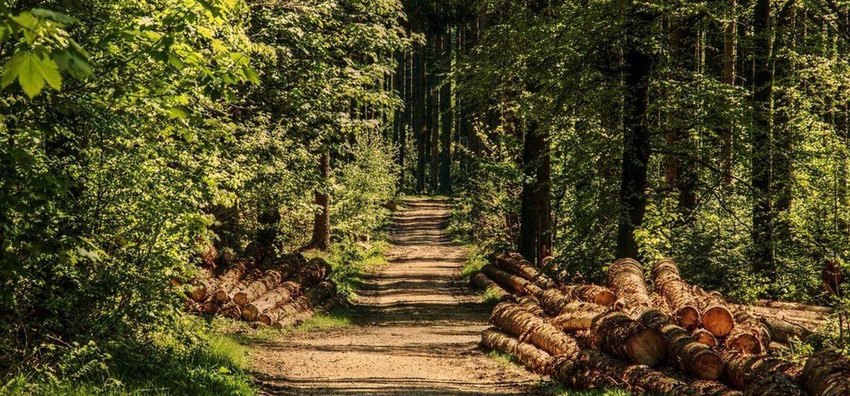 Сколько человек уже оштрафовали в Барановичском регионе за время действия запрета на посещение леса