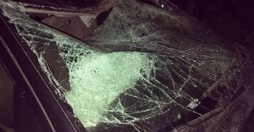 Фотофакт. На трассе М1 под Барановичами автомобиль сбил лося