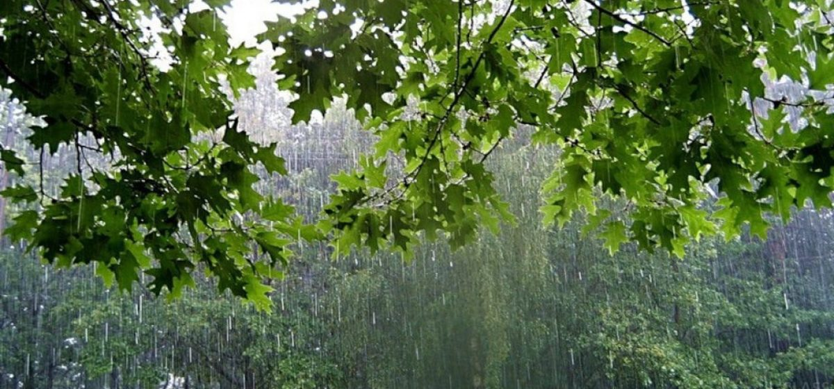 Метеорологи: В Барановичи идут дожди