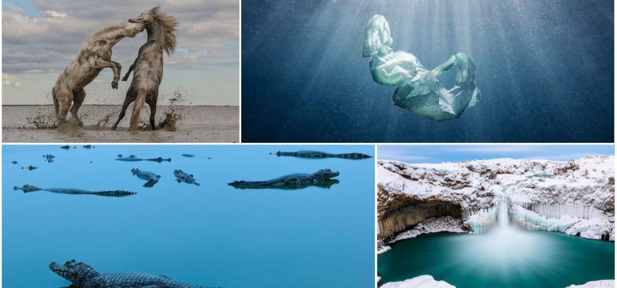 Впечатляющие снимки с конкурса The Nature Conservancy Photo Contest: подборка за 2018 год