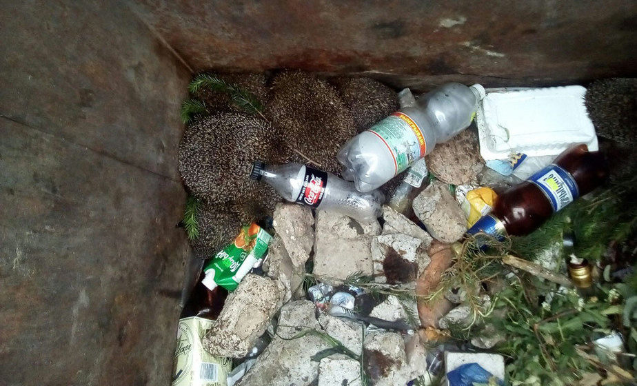 В Минской области в мусорном контейнере нашли 12 живых ежиков