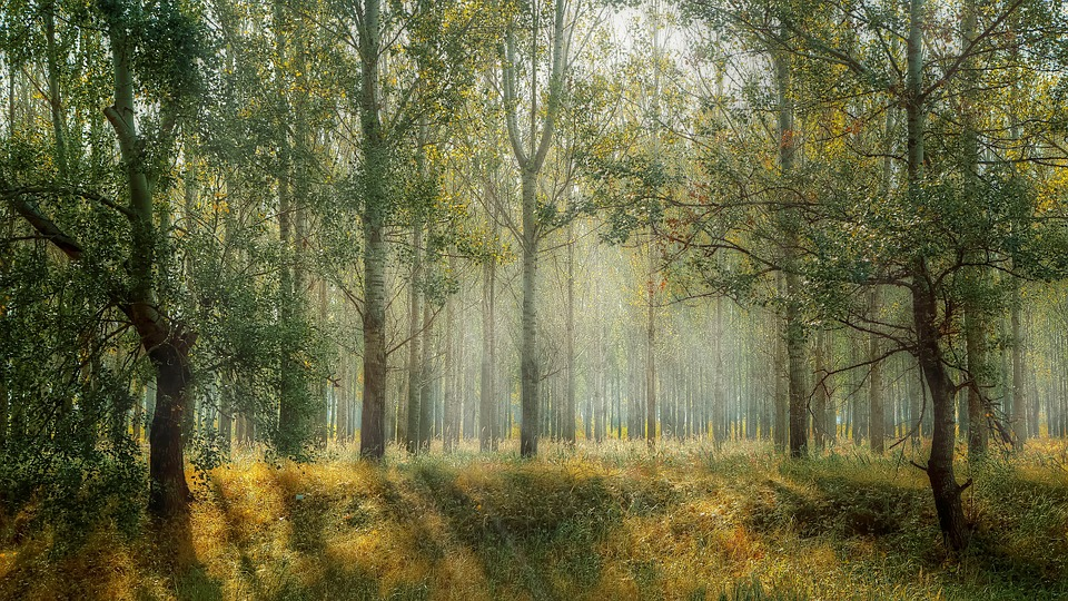 В Барановичском регионе снимут запрет на посещение леса