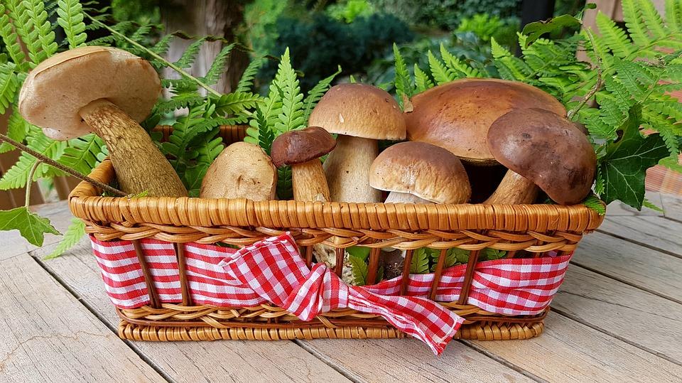 Специалисты рассказали, стоит ли в этом году ожидать обилия грибов