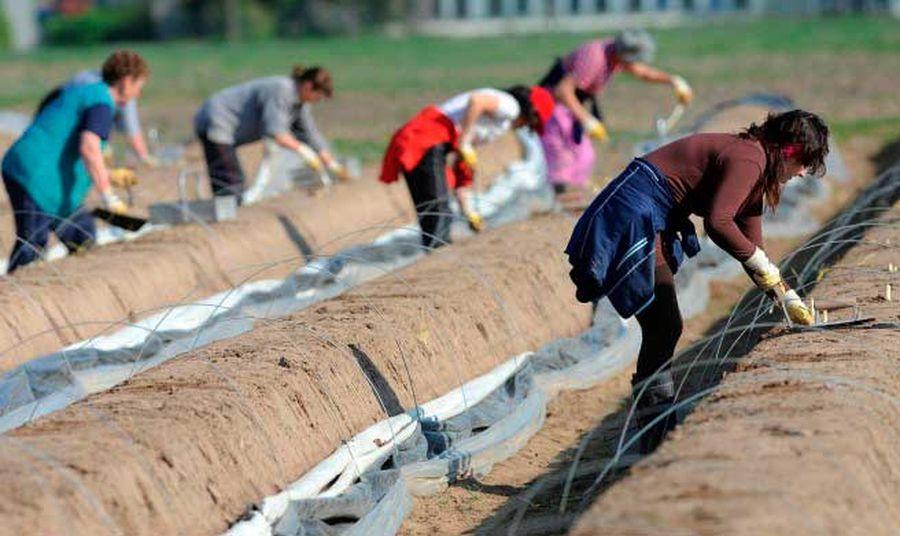 Сезонные работы в Польше: сколько и на чем можно заработать?