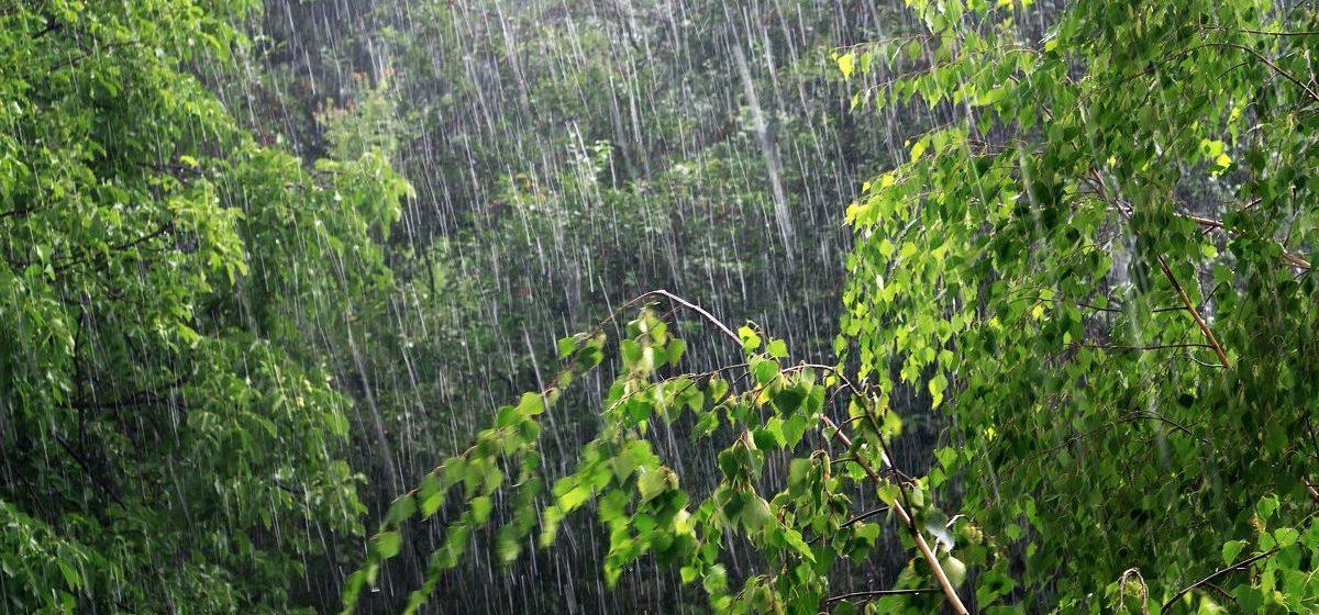 Метеорологи рассказали, закончится ли в ближайшие дни дождь в Барановичах
