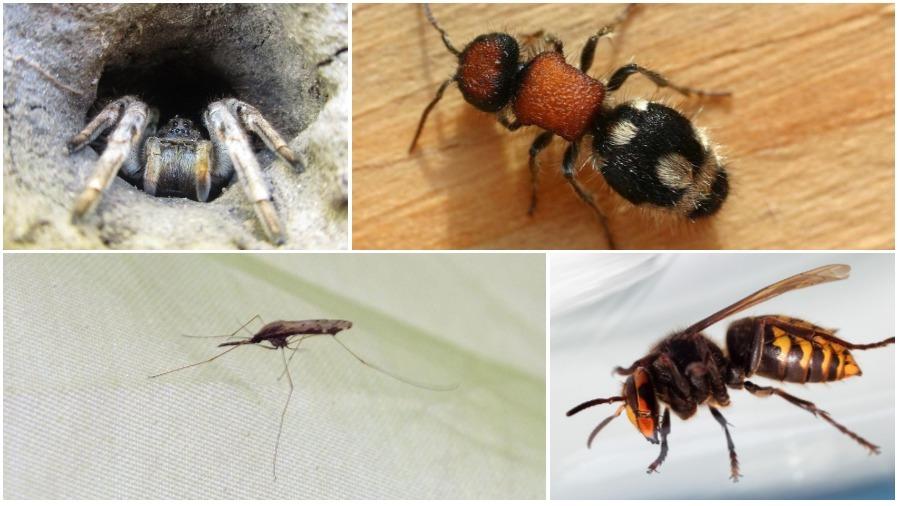 ТОП-5 опасных насекомых и пауков Беларуси