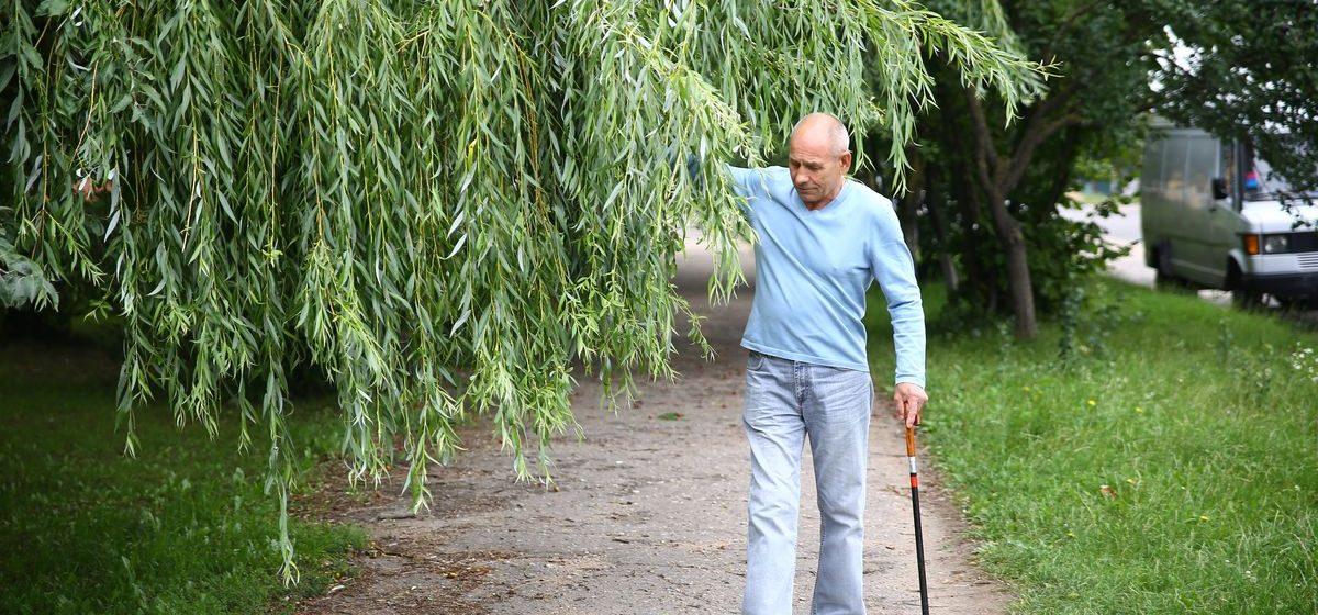 Вопрос-ответ. Кто отвечает за обрезку деревьев в Барановичах?