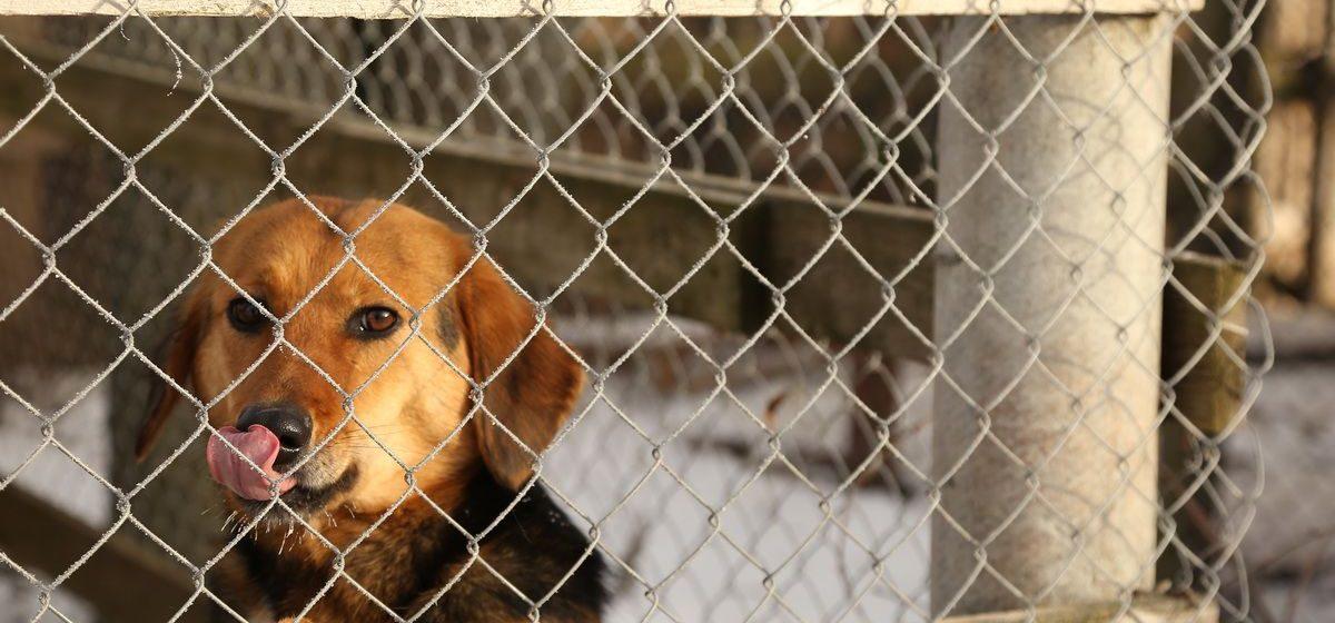 «Корма для питомцев почти нет». Приюту для бездомных животных под Барановичами срочно нужна помощь
