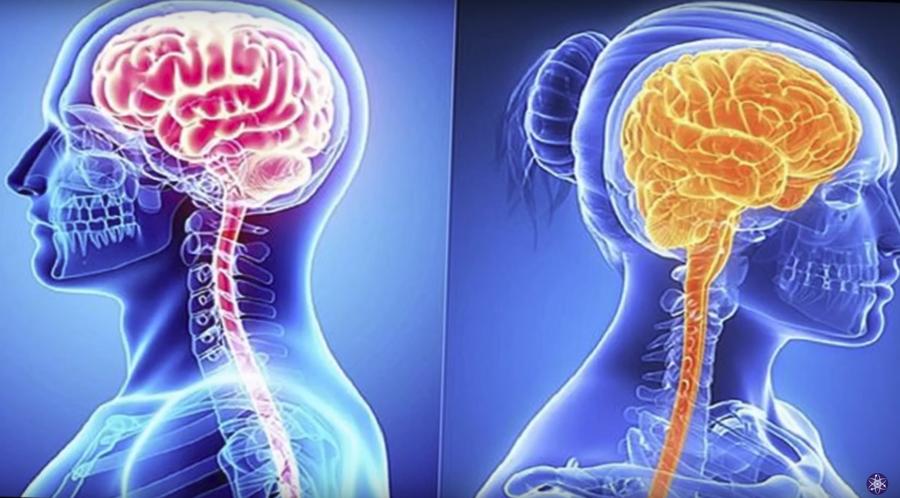Мозг мужчины и мозг женщины: пять различий