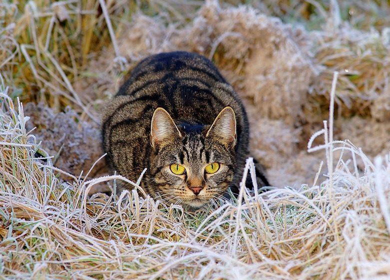 В Барановичах бешеные кошки покусали четырех человек. Карантин планируют ввести в двух микрорайонах