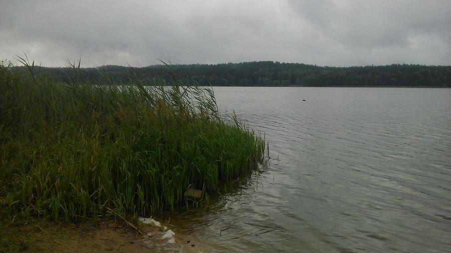 «Зеленый портал» съездил на Гать: «Вообще, плавать – полезно, но здесь лучше не надо»