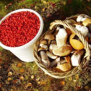 По какой цене можно сдать яблоки, чернику, черноплодную рябину и грибы