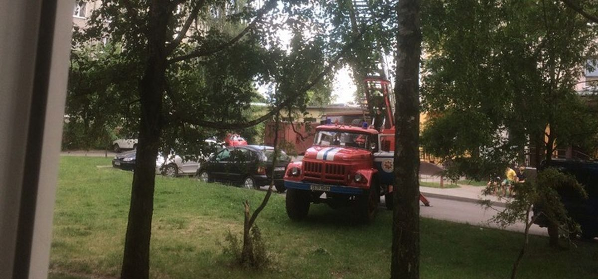 Фотофакт. В Барановичах сотрудники МЧС снимали с верхушки дерева кота