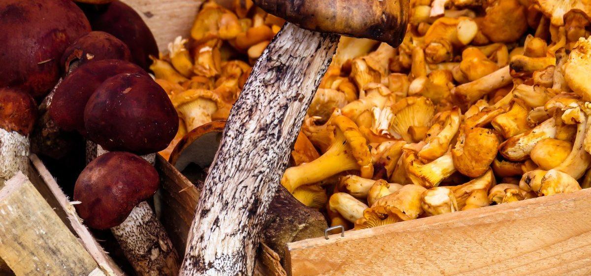 Ученые рассказали об урожае грибов и ягод в Беларуси