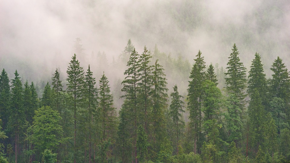 Барановичский лесхоз призывает отказаться от похода в лес на выходных