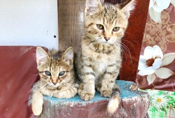 Помочь приюту для бездомных животных в Барановичском районе теперь можно через смс-сообщение