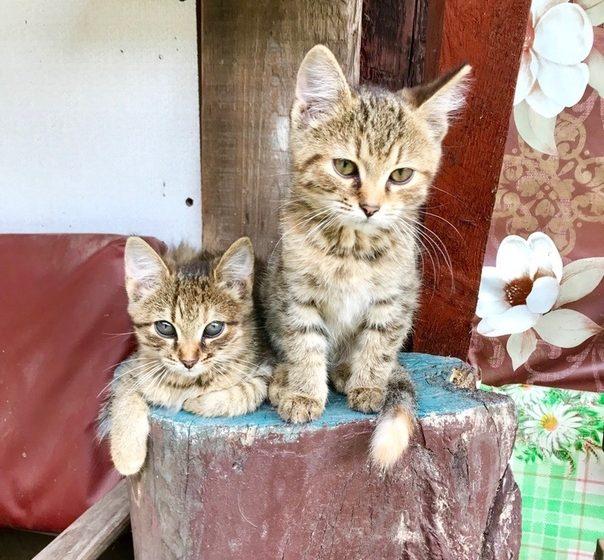 Что известно о строительстве приюта для бездомных животных в Барановичах