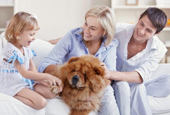 Какое имущество подлежит страхованию?
