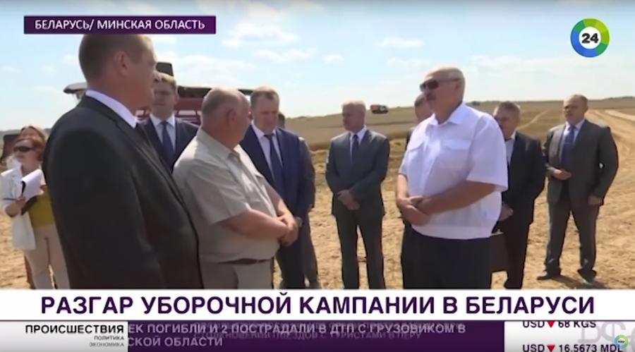 Видеофакт. Лукашенко отправил сына Колю на комбайне убирать тритикале