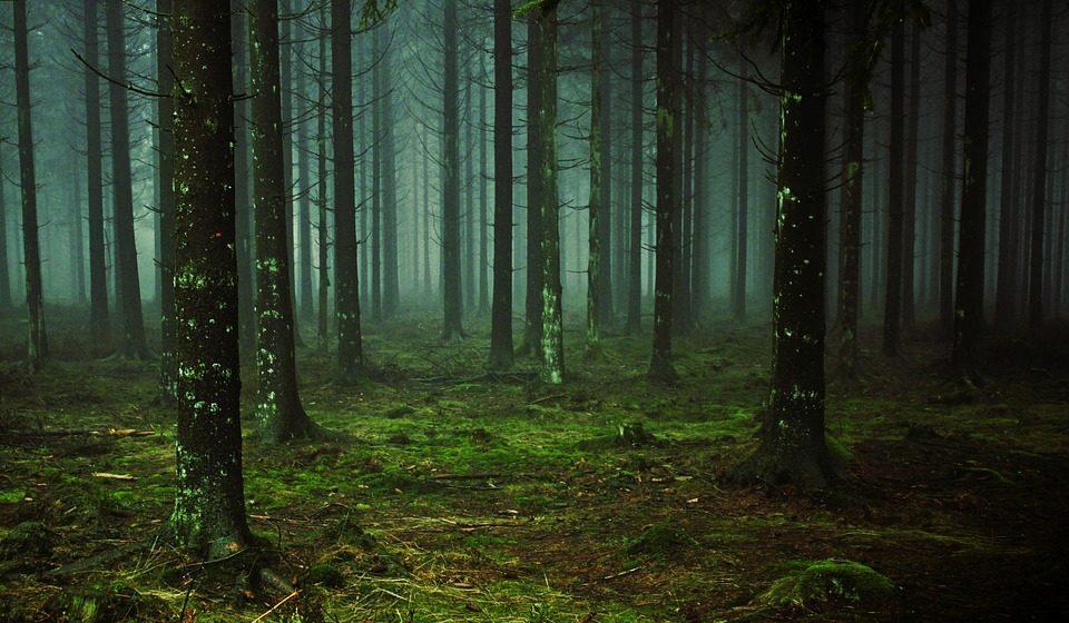 В Дрогичинском районе нашли потерявшуюся пенсионерку, которая 11 дней провела в лесу