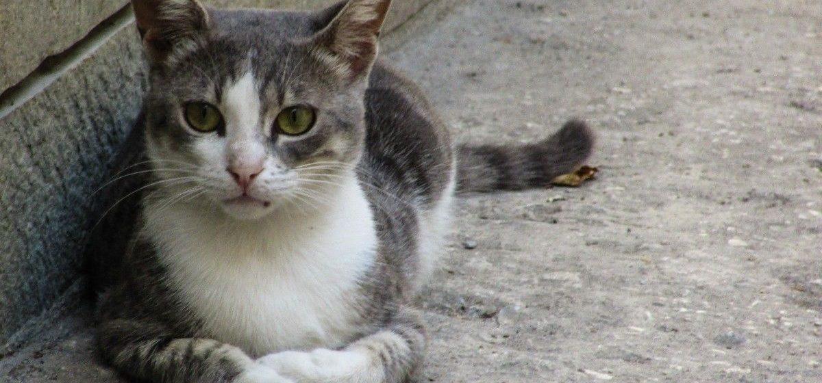 Объявлен тендер по выбору проектировщика приюта для временного содержания бездомных животных в Барановичах