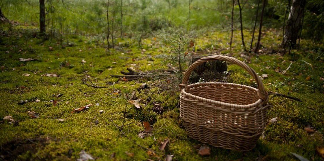 Истощенного грибника нашли в Витебской области: он провел в лесу почти неделю